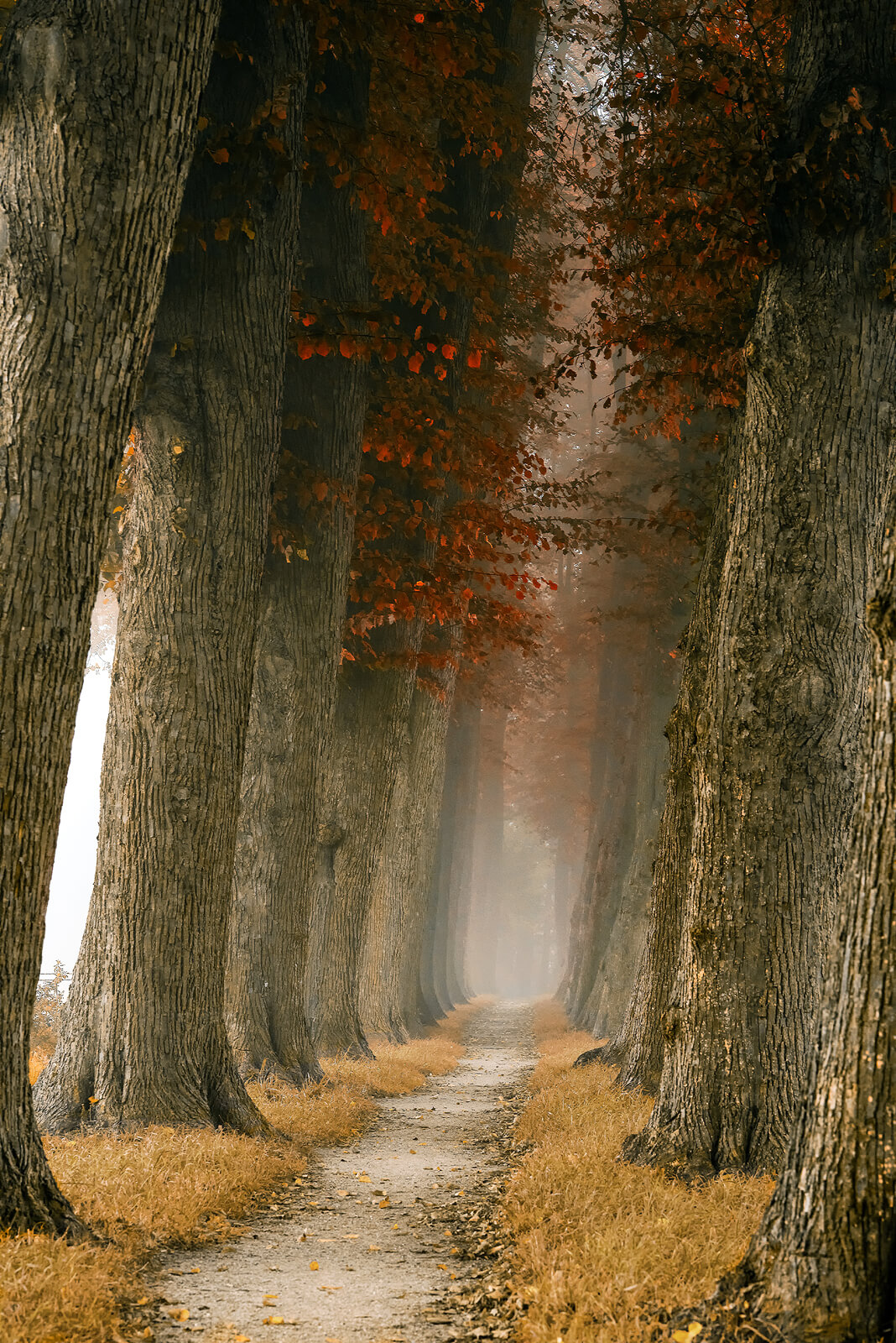 Lane of Likable Tall Reds