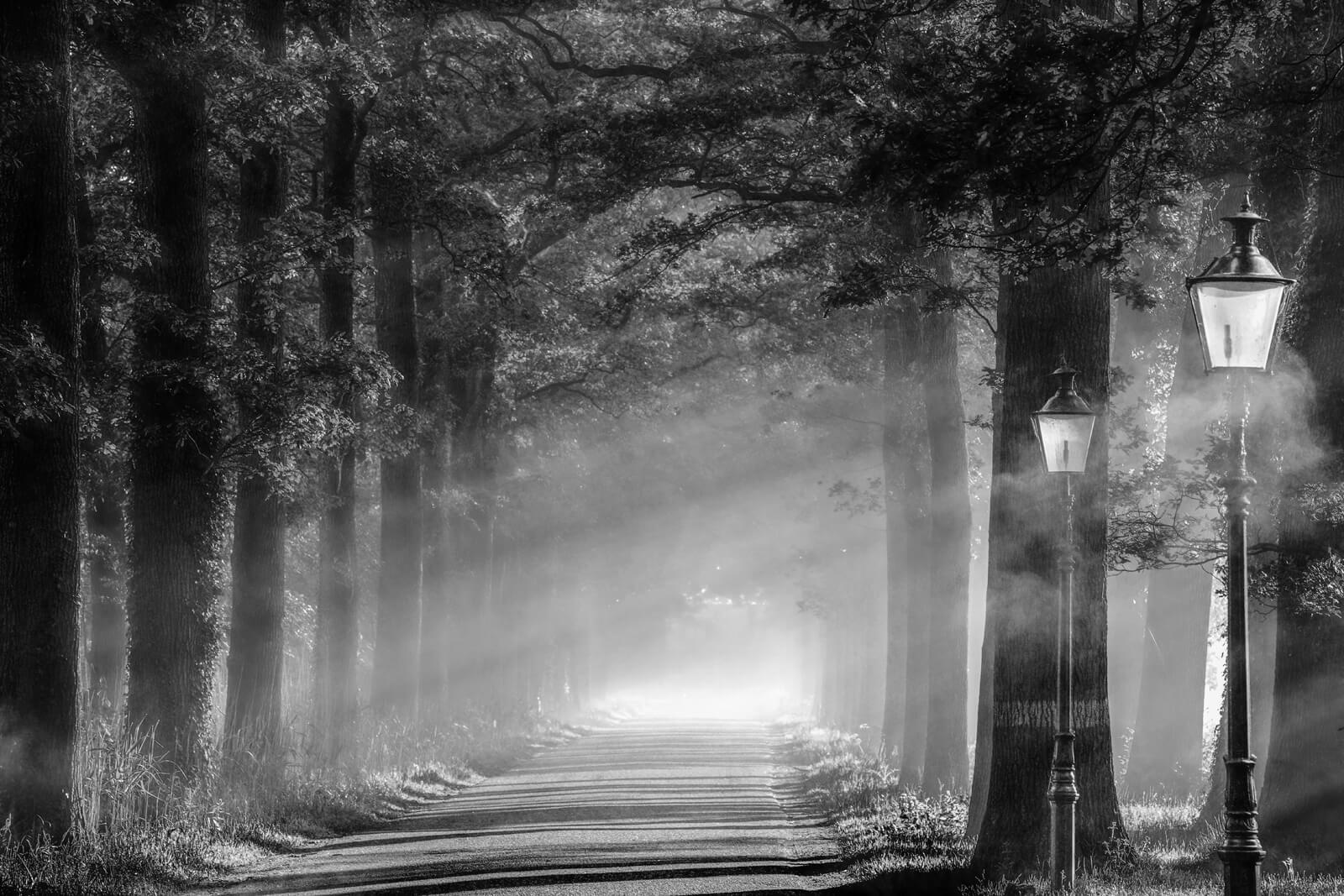 Light, Shadow and Lanterns