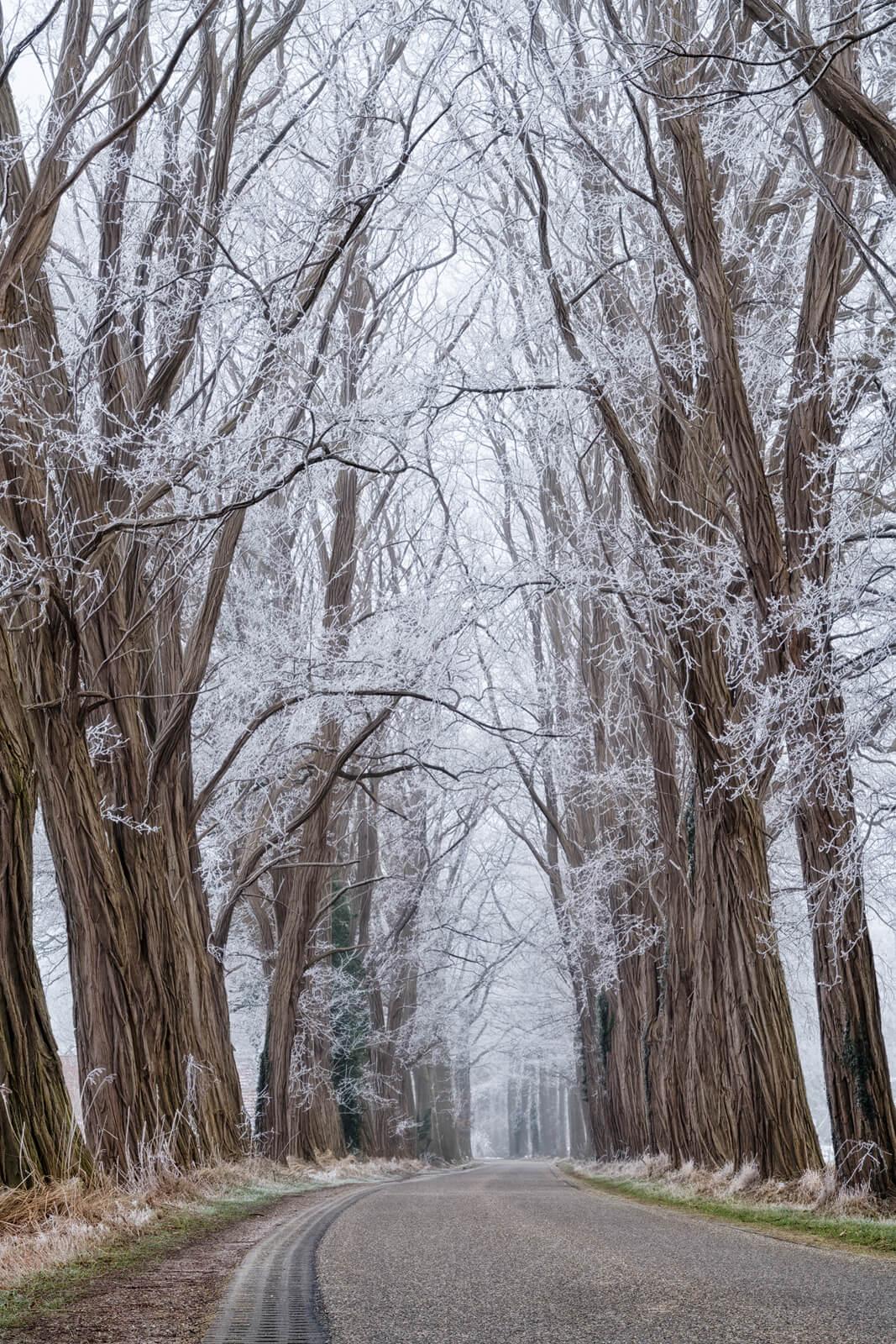 Acacia Lane in Winter