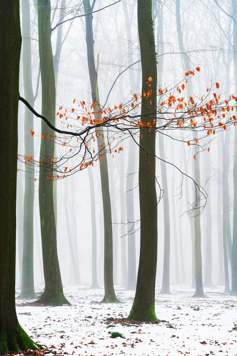 Winter Colors III