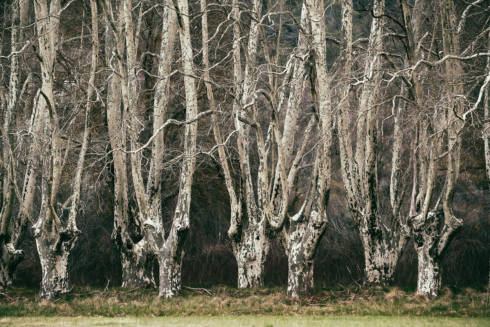 Hidden Woods