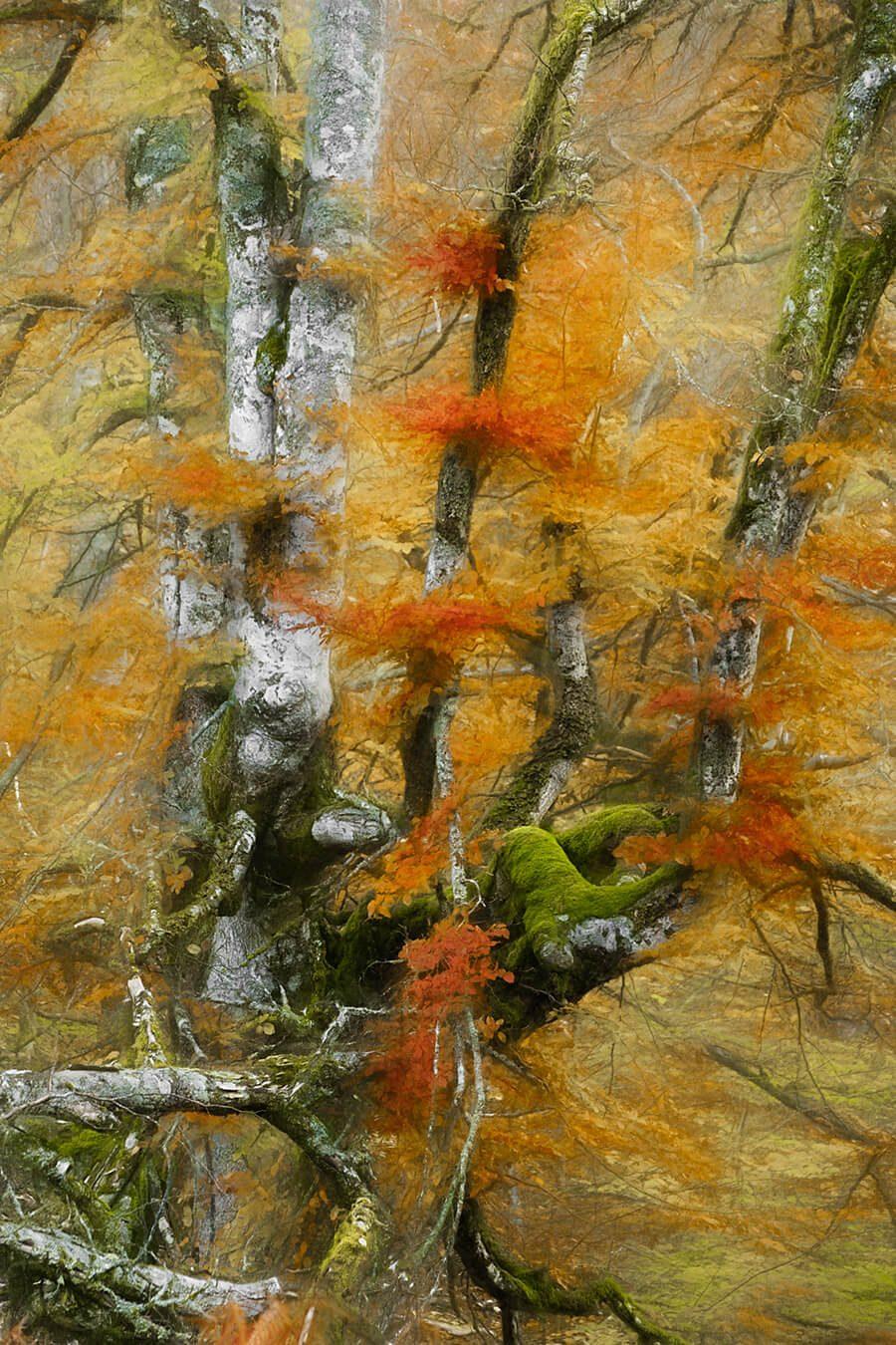 Nature's Paint