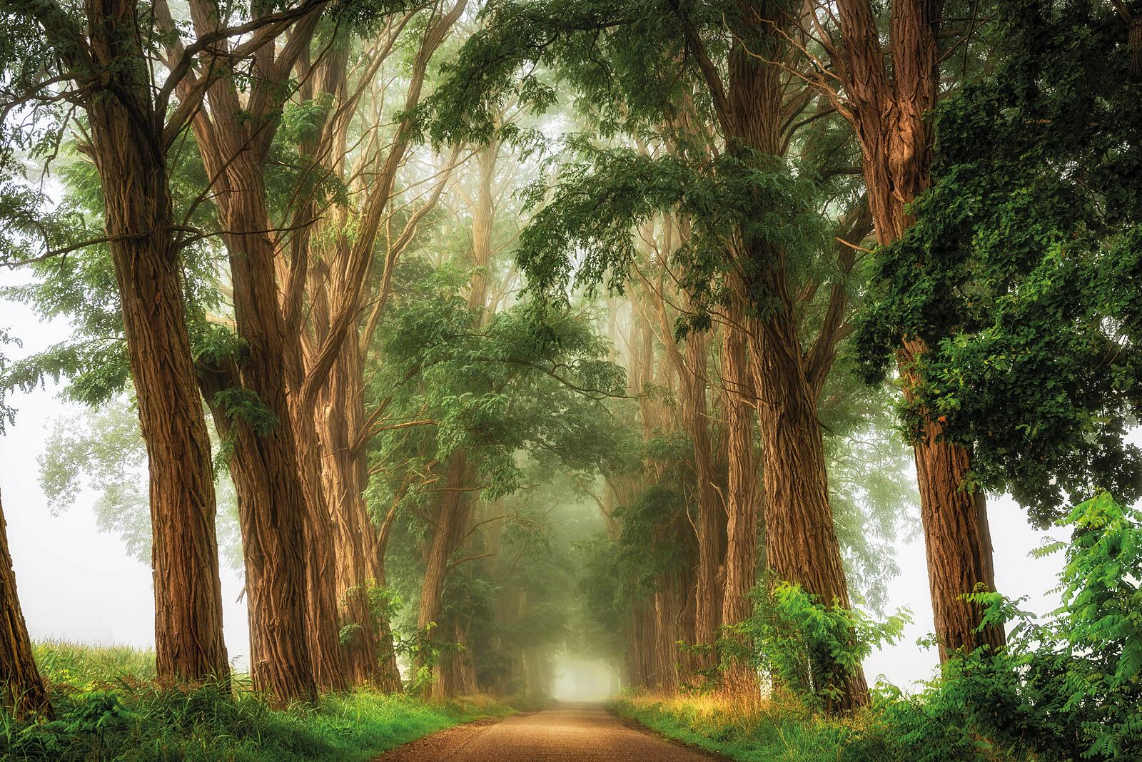 Acacia's the Mist